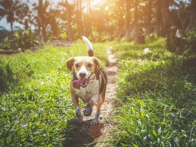 Your Pet's Health: 8 Things to Look Out For
