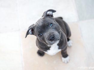 WANTED! Medium – Large Puppy